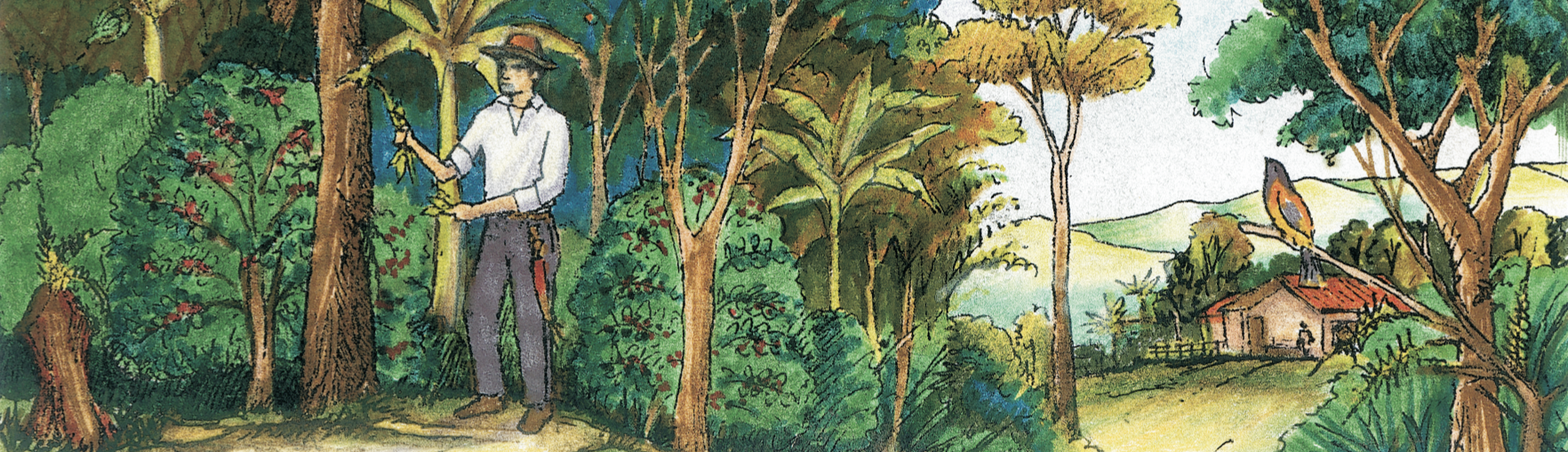 This illustration shows a Bird Friendly coffee grower tending to a tree in his coffee forest