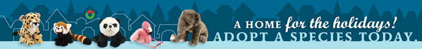 "stuffed animals with the text ""A home for the holidays: adopt a species"""