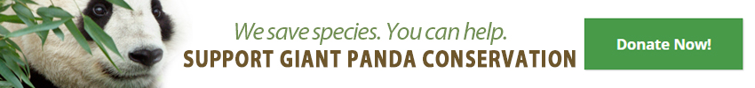 "A photo of the face of a panda with the words ""We save species. Support Giant Panda Conservation"" with a donation button"