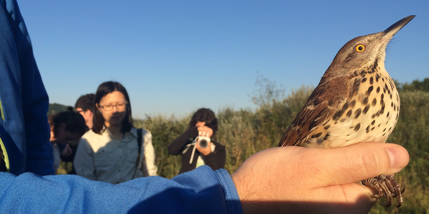 A bird with brown, beige and brown-speckled feathers being held in a researcher's hand. Onlookers watch and take photos in the background